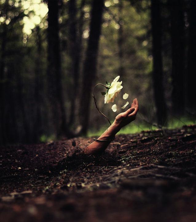 un-autre-bras-sortant-de-terre-avec-cette-fois-une-fleur-ayant-pousse-dessus_50eb4ef11916390663bd933271d4edbbbd6110fe